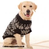 Ollie-Canine-&-CO