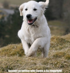 Dog Daycare North Wales