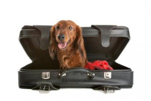 dog-in-suitcase-blog1